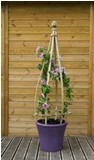 Small Clematis Flowerbell (Pack of 2)
